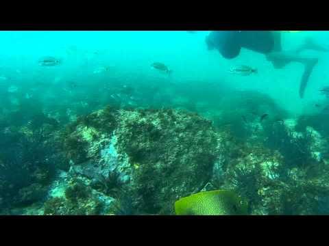 Plongée Sous Marine à Gorée