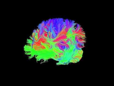 Mokslo sriuba: ar įmanoma tapti genijumi?