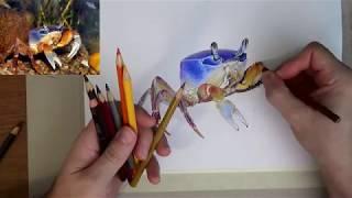 Рисую краба детскими цветными карандашами