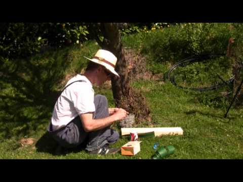 how to keep ants off peach trees