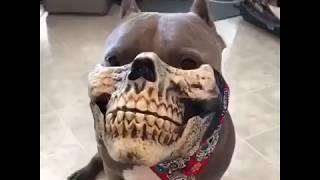 Забавный намордник для собаки.