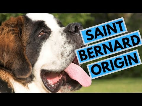 History of the Saint Bernard