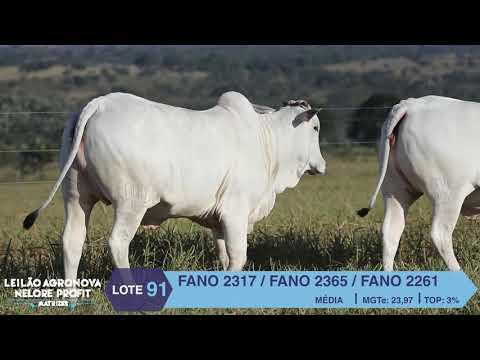 LOTE 91 FANO 2317 X 2365 X 2261