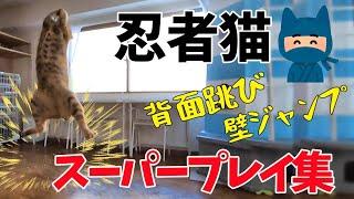 NEKOHAMAキャンディーズ、ラン、スー、ミキの三姉妹より 今回はスーちゃんにスポットを当てて紹介します♪ 忍者のような超ジャンプが得意なおて...