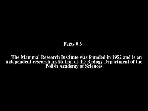 Mammal Research Institute of the Polish Academy of Sciences Top # 5 Facts