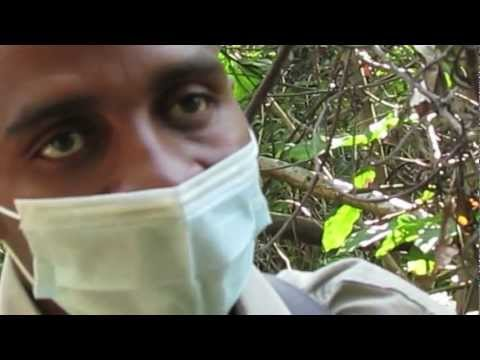 Africa-A Flying Safari.mov (Version 2)