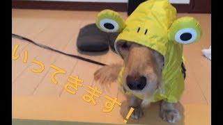 梅雨です。今日は雨なのでレインコートを着て出発だ!! 着替えるルーシ...