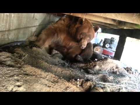 Медведь красиво ушёл