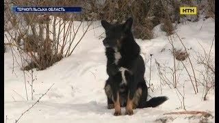 На Тернопільщині пес біля дороги півроку чекає на хазяїна
