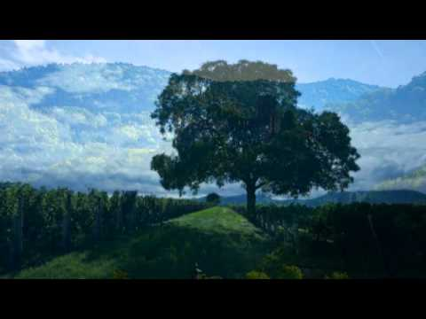 Schubert: String Quartet in C Minor, D 703 - Allegro assai