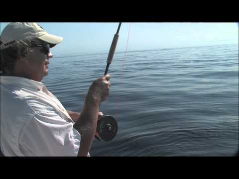 """East Cape Fly Rod Roosterfish"" This Week on AWTV"