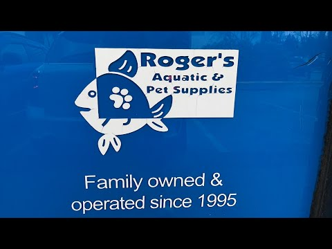 HOW Is A LOCAL FISH STORE RUN? Behind The Scenes At A Local Fish Store- Roger's Aquatics