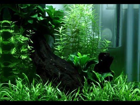 Мини аквариум на 15 литров от Tropica