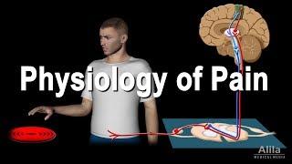 Pathology (Medical Specialty)