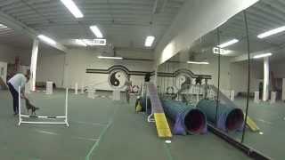 Cocker Spaniel Junior Agility Training Beginner 08/02/2015 Miami