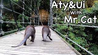Funny looking otters walking with their bow legs in the mountains. [Otter life Day 614]
