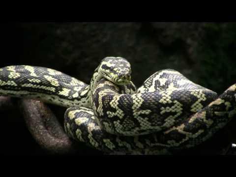 Randers regnskov - Snakes