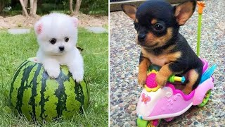 Baby Dogs  Cute and Funny Dog Videos Compilation #7   Funny Puppy Videos 2020