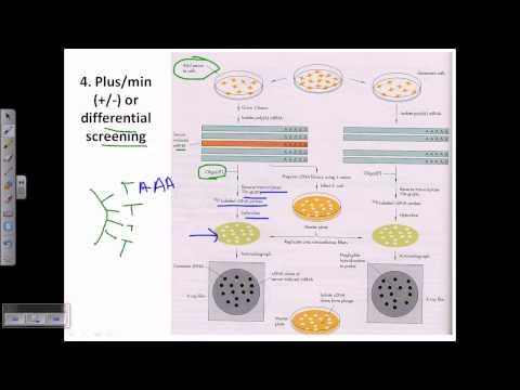 Genomic library screening: differential screening