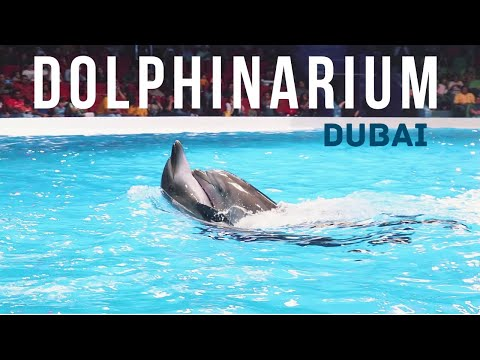 Dubai Dolphinarium   Dolphins and seal show   Full show video