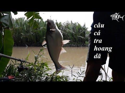 CÂU CÁ TRA SÔNG VÀ ANH THỖ ĐỊA DỄ THƯƠNG | HUYNH KHOA FISHING
