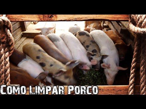 Como Abater e Limpar Porco  - Preparo Completo