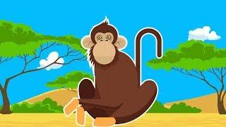 Дикие Животные Африки.Мультик о Шимпанзе для Детей.Развивающий Мультфильм. Обучающее Видео для Детей