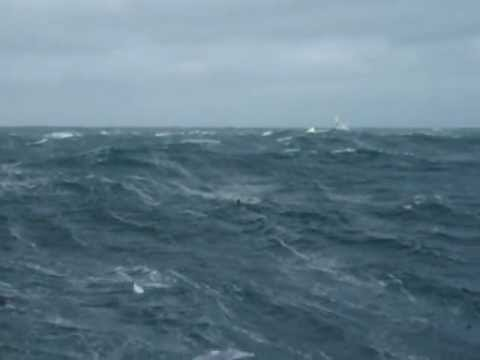 Bering Sea swallows 90