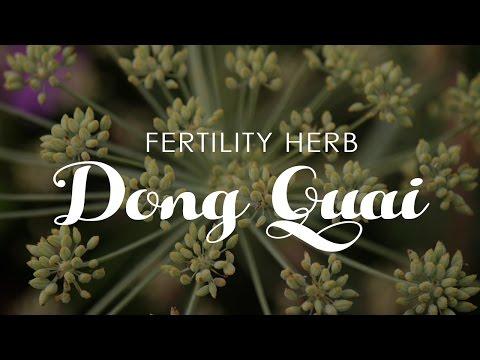 Fertility Herb: Dong Quai