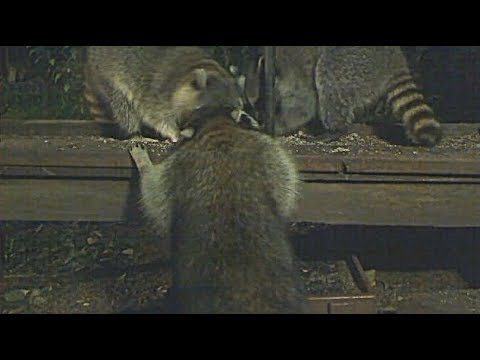 Littlehouse Cam 5 (HD)