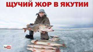 Щучий жор в Якутии Последний лёд
