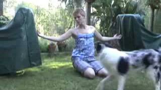 Dog Trick Training Tutorial: How To Train Your Dog To Jump Over Your Arms