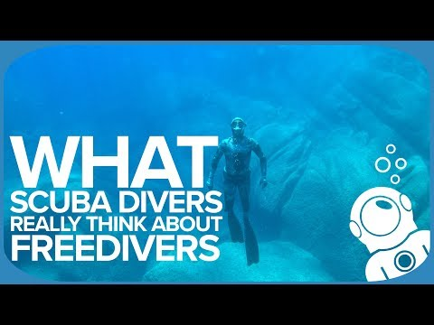 What Scuba Divers REALLY Think About Freedivers