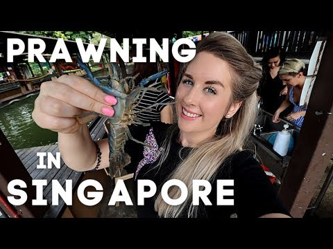 PRAWNING In SINGAPORE - Be CAREFUL! | 2019 |