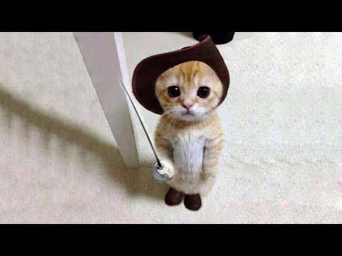 【面白い動画】 かわいい猫 - かわいい犬 - 最も面白いペットの動画 #6