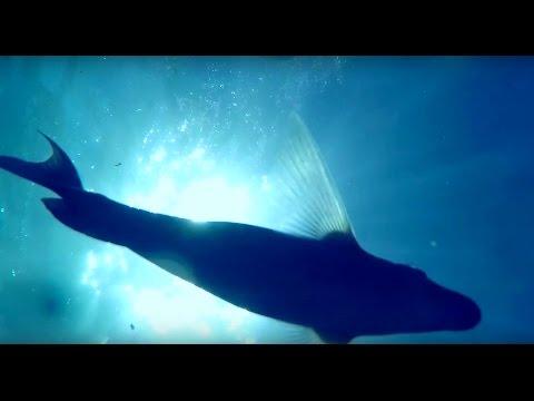 Lost GoPro in the Ocean