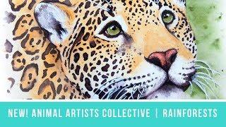 Baixar Animal Artists Collective: Tropical Rainforests   Jaguar Portrait