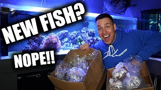 UNBOXING AQUARIUM CORAL! - The king of DIY saltwater fish tank