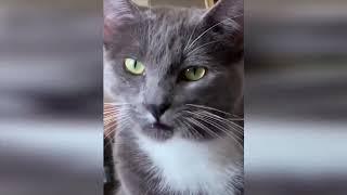 КОШКИ 2019 Смешные Коты 2019 приколы про котов с котами ДО СЛЁЗ Funny Cats Выпуск 1
