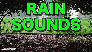 12 Hours of Rain and Thunder Sounds High Quality HD 1080p