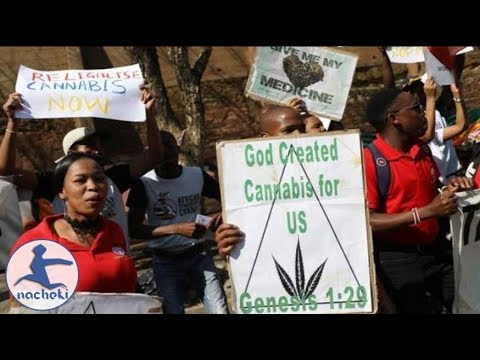 Marijuana is Now Legal in South Africa as Top Court Decriminalizes It