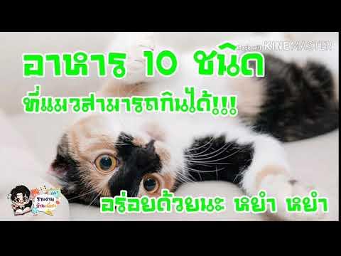 อาหาร 10 ชนิดที่แมวสามารถกินได้ อร่อยด้วยนะ หยำ หยำ