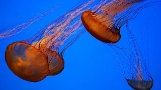 Monterey Bay Aquarium HD