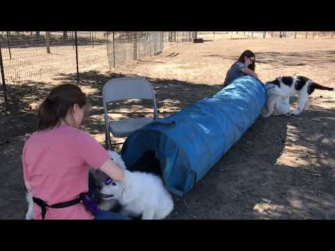 Tunnel & Grooming Table– 9-10 Weeks of Age