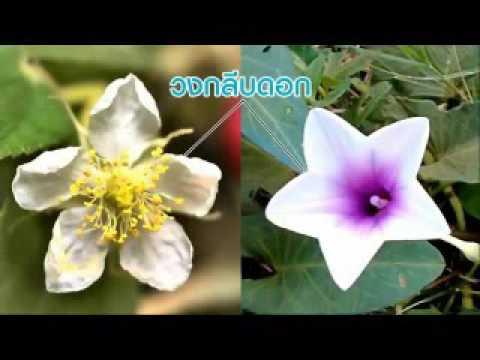 สื่อการเรียนรู้หน้าที่และส่วนประกอบของดอก