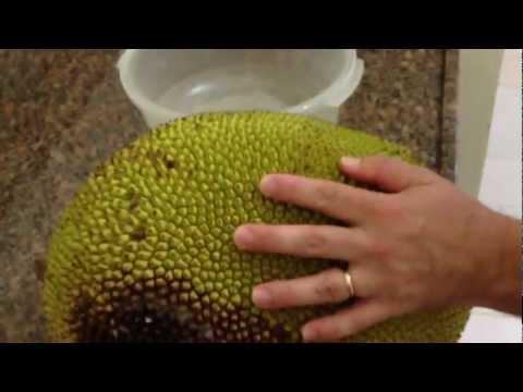 Tutorial: Como Comer uma Jaca. By Reginaldo & Rodnei Morikawa - Joinville - SC - Brasil