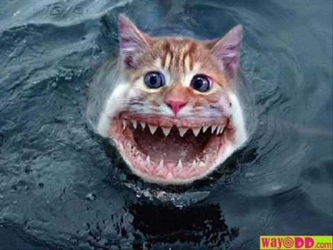 """the not so funny cat pic """"cat shark"""""""