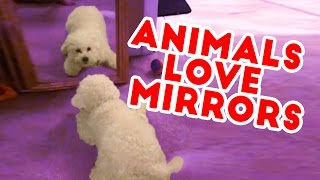 Funny Pets amp; Animals vs Mirrors Reaction Videos of 2016 Weekly Compilation  Funny Pet Videos