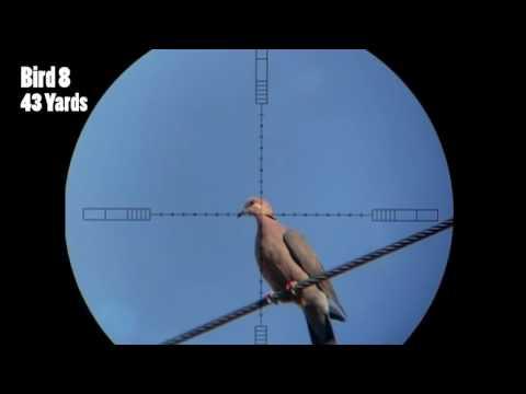 Khi xạ thủ săn chim bồ câu.Dove Hunting.