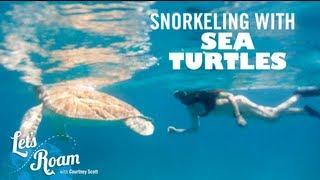 St. Thomas |  Snorkeling with Sea Turtles